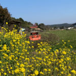 【March】Rice paddy plowing