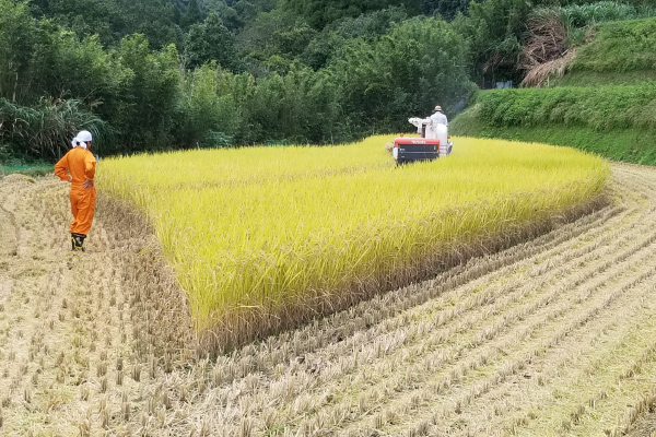 【October】Rice harvesting