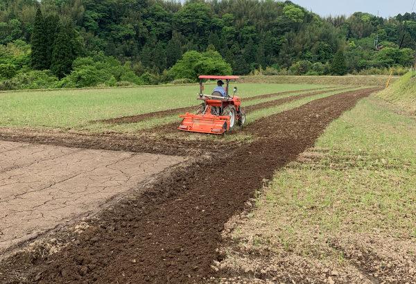 【January】Rice paddy plowing